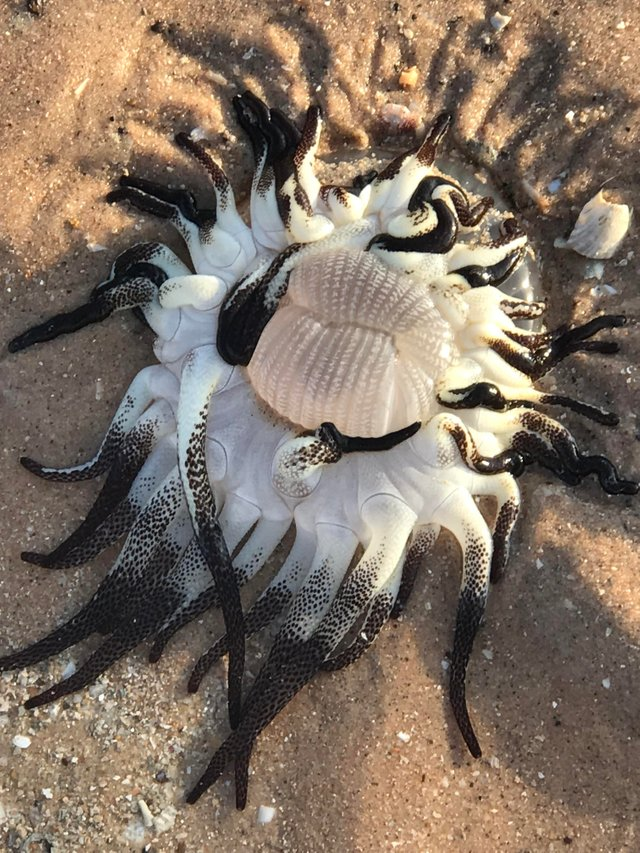 A Mysterious Creature 'Arrived' On The Coasts of Australia (photo)