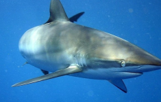 """""""I Learned the Lesson Well"""": A Shark Bites a Surfer in the Head in Brazil."""