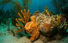 Scientists Discovered the Real Measurements of the Great Amazonian Reef System, Which Could be a Great Biodiversity Corridor Between the Caribbean Sea and the South Atlantic.