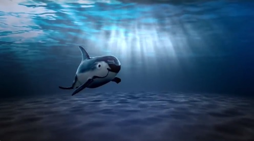 Avian Vaquitas in Mexico, Species in Danger of Extinction