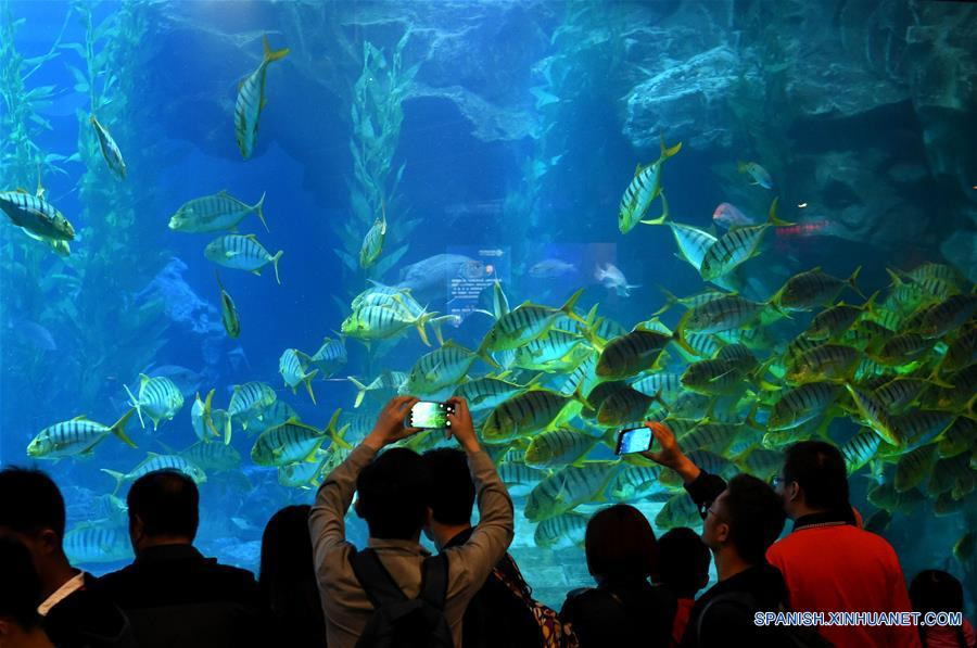 Biological exhibition in the underwater world of Qingdao