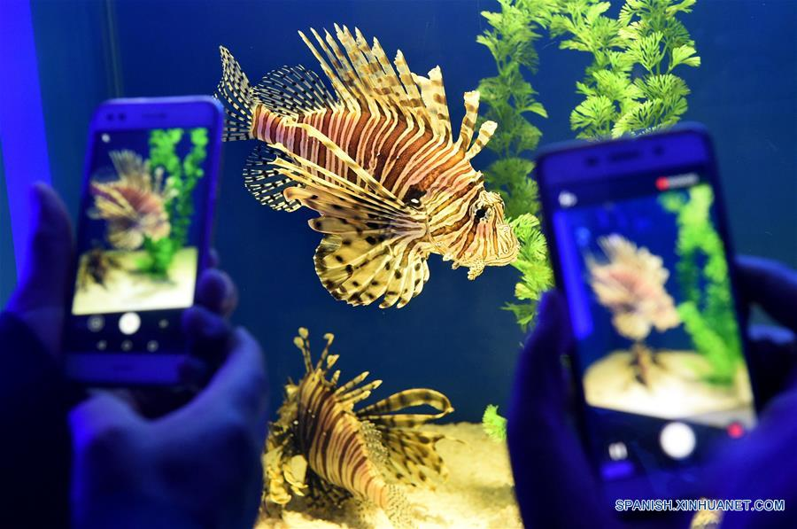Biological exhibition in the underwater world of Qingdao1