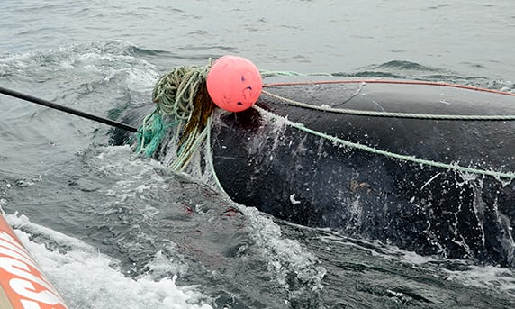 American agency suspends whale rescue efforts after death of New Brunswick fisherman