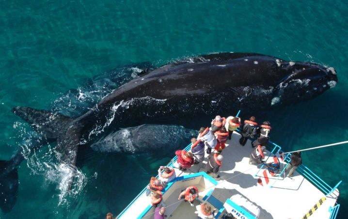 Climate Change Makes Fatal Collisions Between Whales And Ships More Frequent