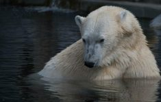 Commotion by Polar Bear Trying to 'Revive' a Bird That Had Received As Food