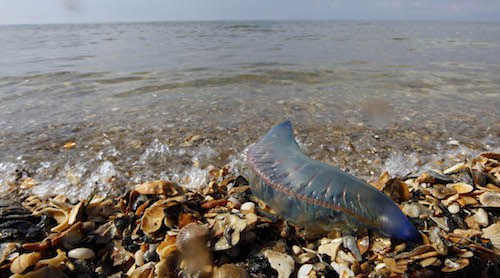 Devastating Images of Animals Affected by Marine Pollution