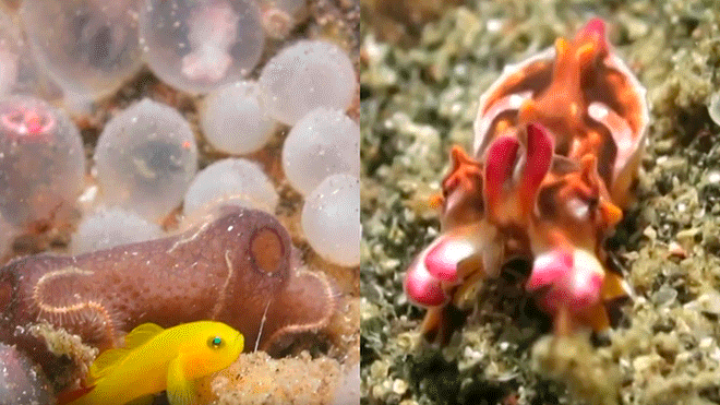 Diver Captures the Birth of a Precious Aquatic Animal and Goes Viral