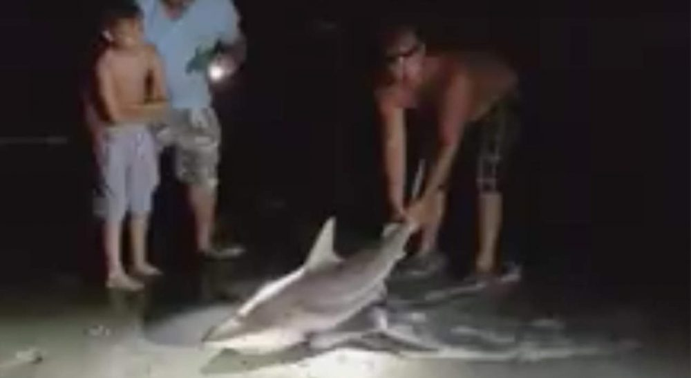 Fisherman Risks His Life to Return the Shark to the Sea
