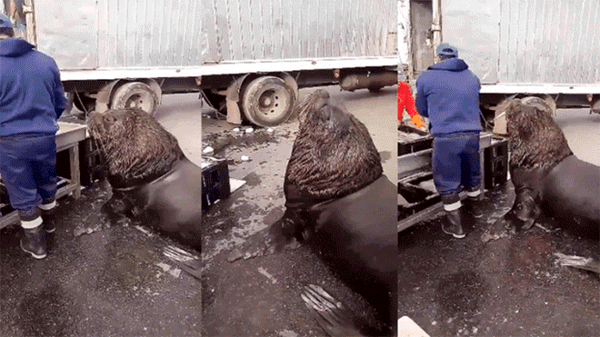 Fishermen Were Sorting Fish Haul When The Most Adorable Beggar Approches Them