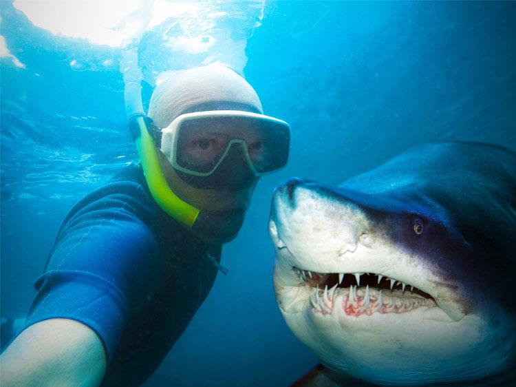 Getting to know sharks better