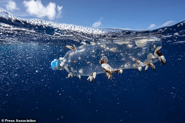 Greenpeace and Scientists ask that at Least 30% of the Oceans be Protected by 2030