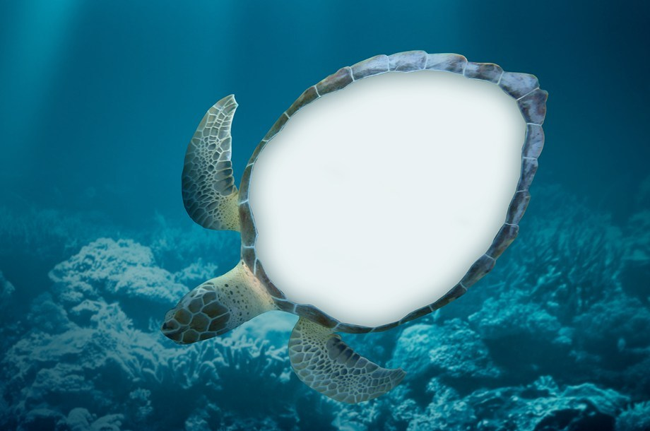 HAWKSBILL TURTLES, MONITORED BY ILLEGAL TRADE