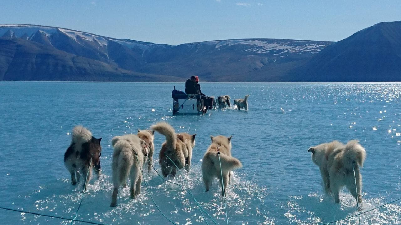 Heartbreaking Image Seen Around The World: Dogs In Greenland Run On Water Instead Of Ice