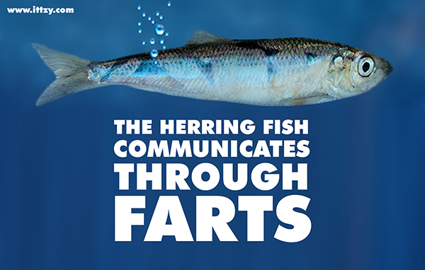 How Fish Farts Almost Caused a Diplomatic Accident but Founded the Most Liberal City in the World