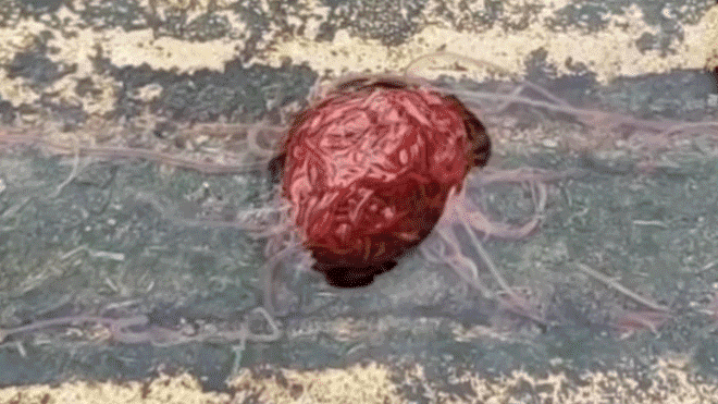 Images Captured of Strange Brain-Shaped Species in the United States