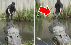 Man Enters Lake to Bothers Crocodile and This Happens.