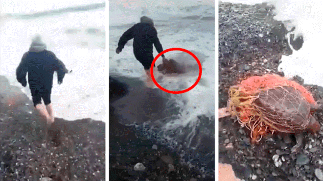 Man Risks His Life by Entering the Sea to Save Turtle Covered in Plastic