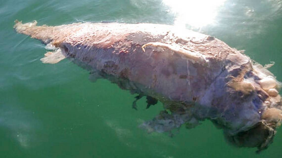 Mexico Possible Remains of a Vaquita Marina Are Found