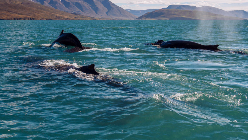 Military Sonations Could be the Cause of Massive Whale Strandings