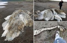 """Mysterious """"Furry Sea Monster"""" Appears in Russia (Photos)"""