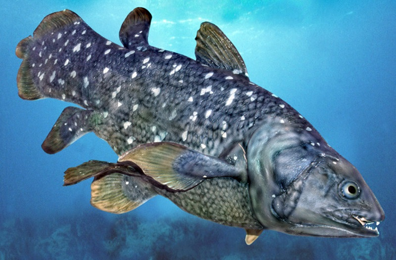 Oil Company Threatens the Last Specimens of a Fish that Survived the Dinosaurs