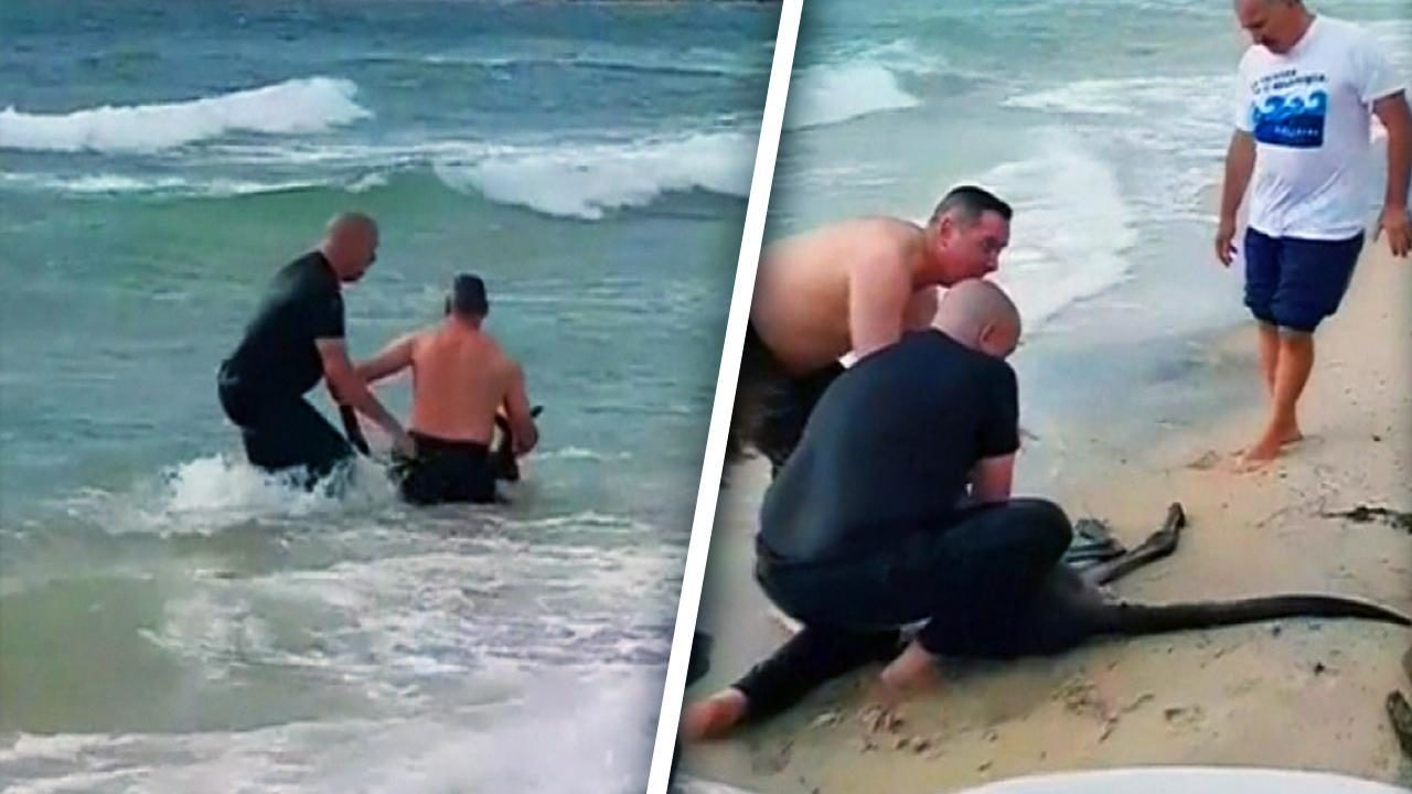 VIDEO: Policemen Throw Themselves into the Sea to Save a Kangaroo from Drowning
