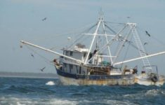 They Warn of Possible Embargo to Mexican Shrimp in the United States