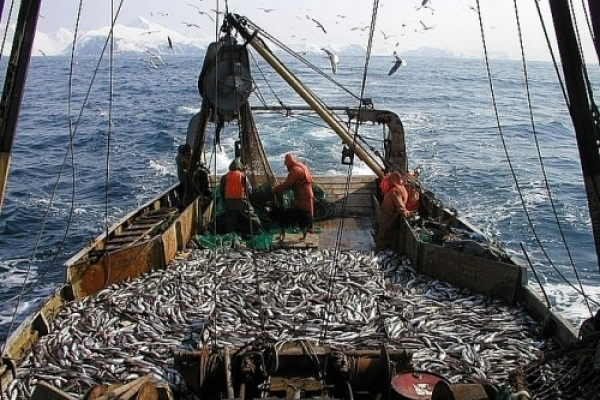 Russia Has Signed an Agreement to Combat Unregulated Fishing in the Arctic