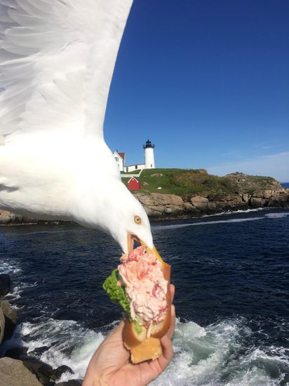 She Was Taking A Picture Of Her $43 Lobster Sandwich Then This Happened