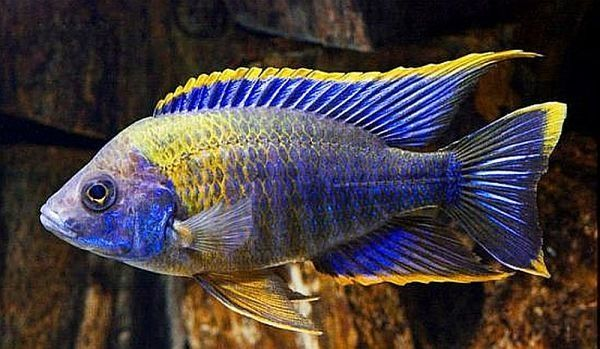 The 10 Most Beautiful Fish You Will See in the World