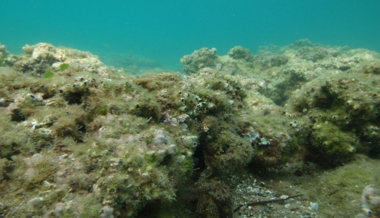 The Bottom of the Sea is Dissolving by the Fault of Humans