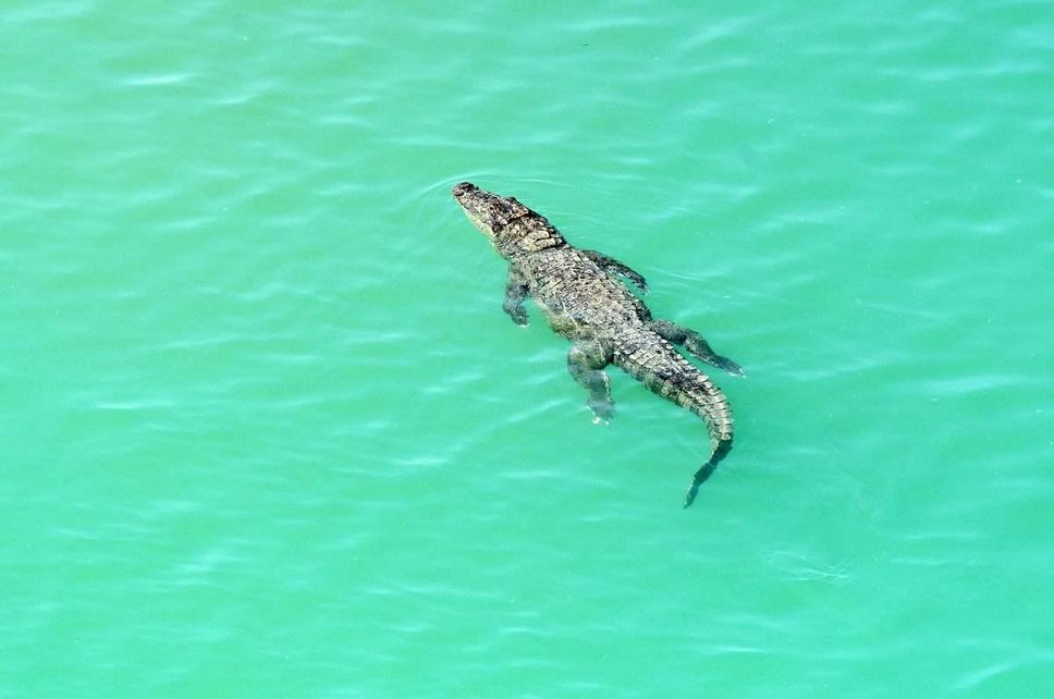 The Strangest Discovery Happened When They Find The Body Of A Man Killed By A Crocodile