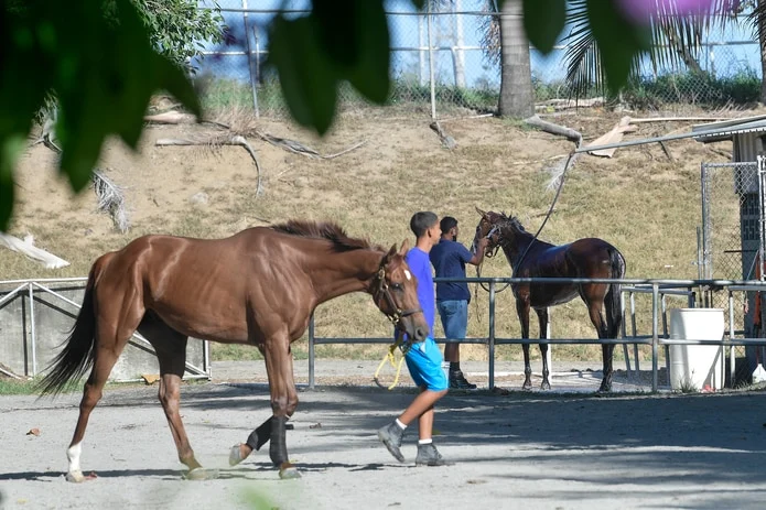 The Unregulated Transportation Of Race Horses By Sea