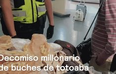 Asian Citizen Who Was Carrying 416 Totoaba Swine is Detained in the AICM VIDEO