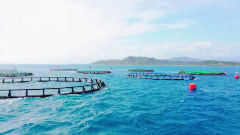 Turkish Company Plans to Produce 15 Tons of Fish for Export in the DR