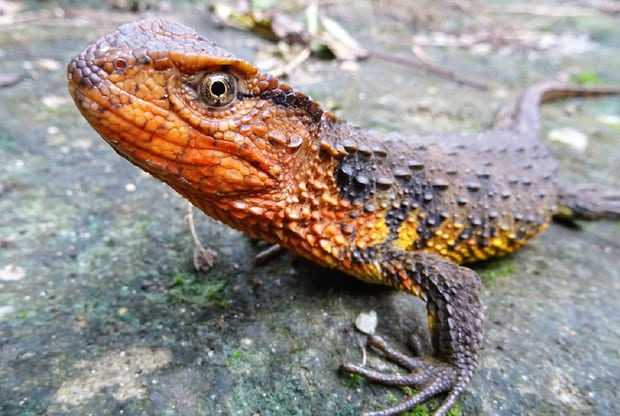 100 new species discovered in Mekong