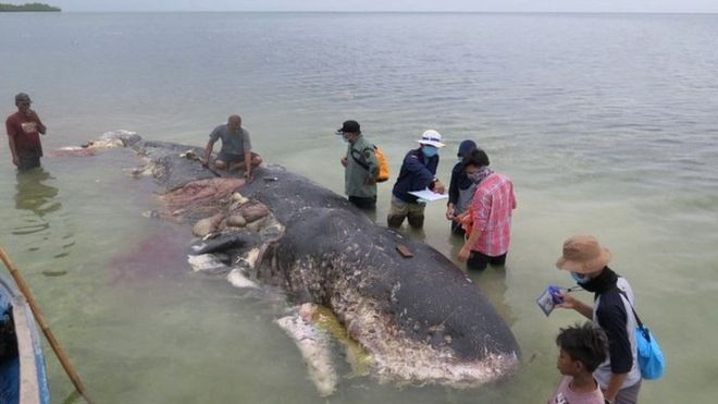 Dead whale had 115 plastic cups, 2 flip-flops in its stomach
