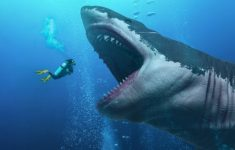 What Led to the Extinction of the Megalodon?