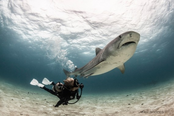 40 Things More Dangerous Than Sharks