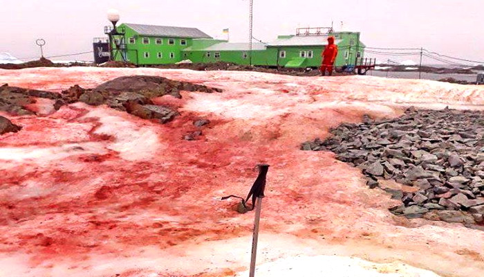 Antarctica Turns Red Like Blood After Mysterious Toxic Algae Spreads (PHOTOS) - Maritime Herald