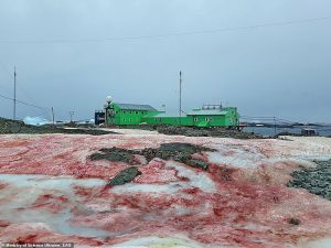 Antarctica Turns Red Like Blood After Mysterious Toxic Algae Spreads