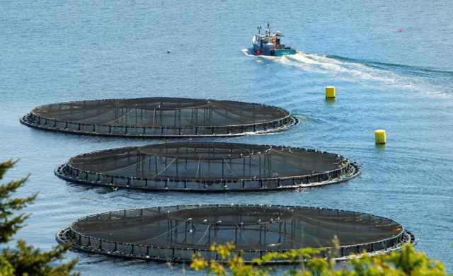 Aquaculture could release between 729 and 747 million hectares of land around the world