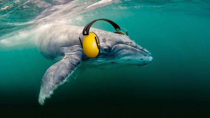 Auditory Pollution, Another Threat to Life in the Oceans