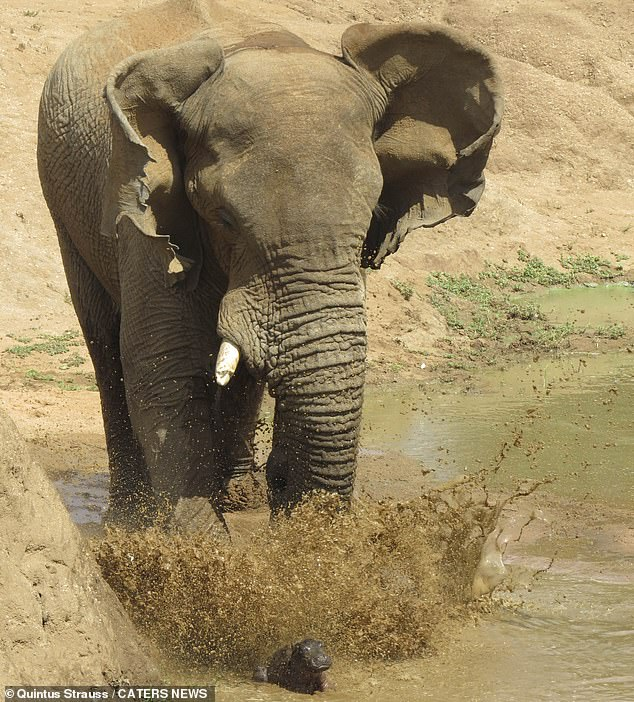 Baby Was Saved From Being Crushed By An Elephant Thanks To His Mother 1