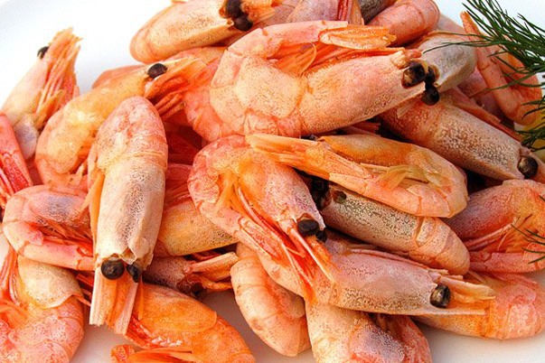Bacteria of Escherichia Coli. Detected In a Batch of Cooked and Frozen Shrimp from the Sakhalin Region