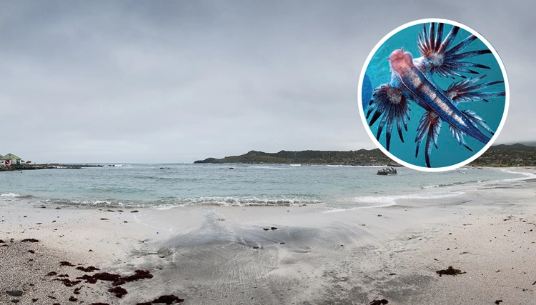 They discover horrifying blue creatures with tentacles on the beach