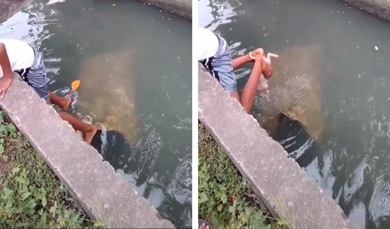 Boy rescues a puppy that fell into an irrigation canal with his feet