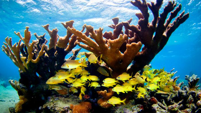 Cuba and the US Sign Memorandum of Understanding for Marine Protection