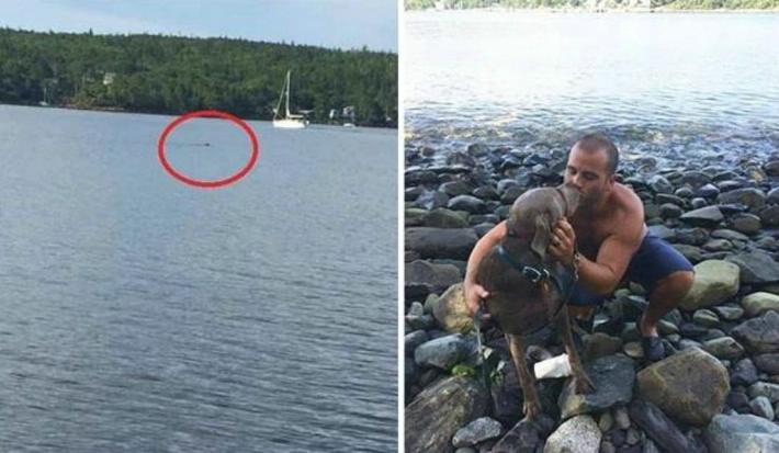 Disinterested Man Saves a Disoriented Dog in the Sea