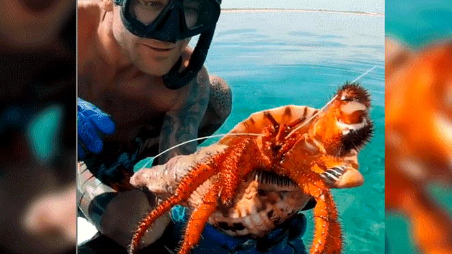 Diver Presumes that he Discovered a Giant Crab and then it Makes him Embarrassed